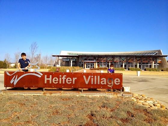 heifer1
