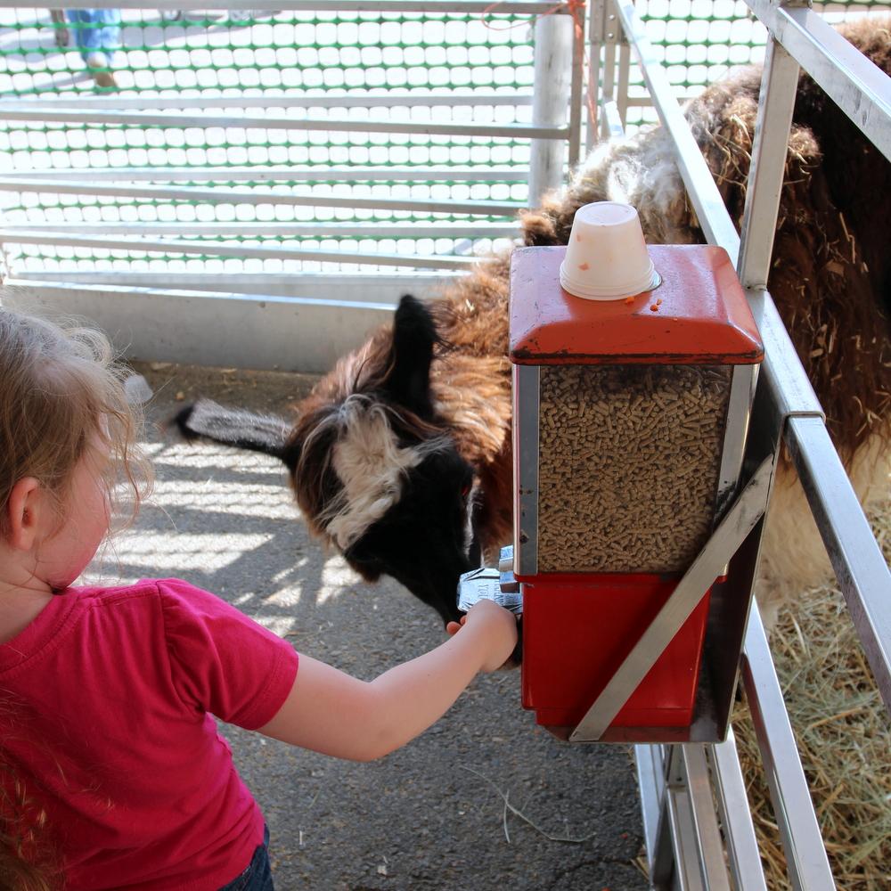 AR State Fair feed animals