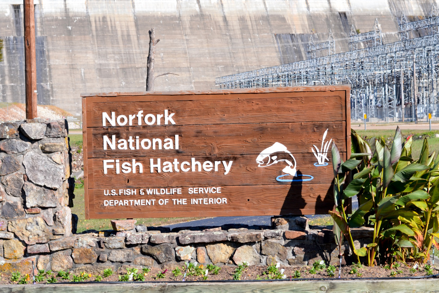 norfork-fish-hatchery sign