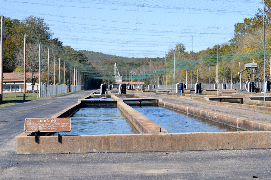 norfork-fish-hatchery tanks