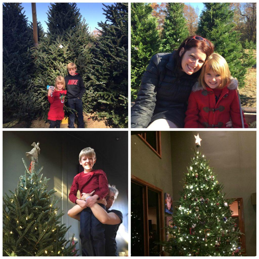 Cut Your Own Christmas Tree Virginia