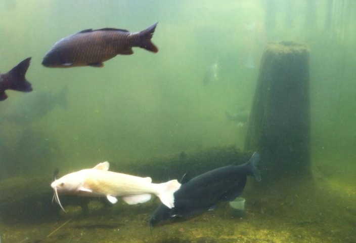 Delta Rivers Nature Center Fish