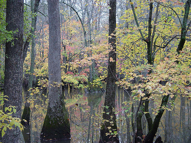 Bayou_DeView_Arkansas_in_the_Cache_River_National_Wildlife_Refuge