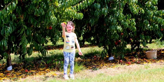 Lamar Peach Pickin Paradise by Kat Robinson (10)