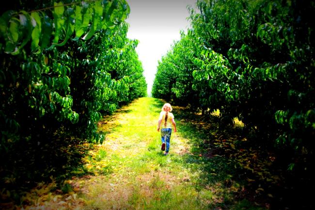 Lamar Peach Pickin Paradise by Kat Robinson (2)