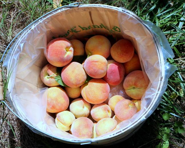 Lamar Peach Pickin Paradise by Kat Robinson (7)