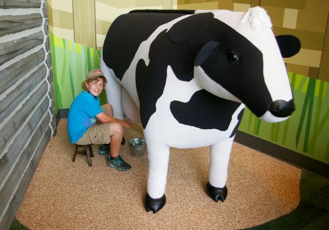 Amazeum milk cow 2015
