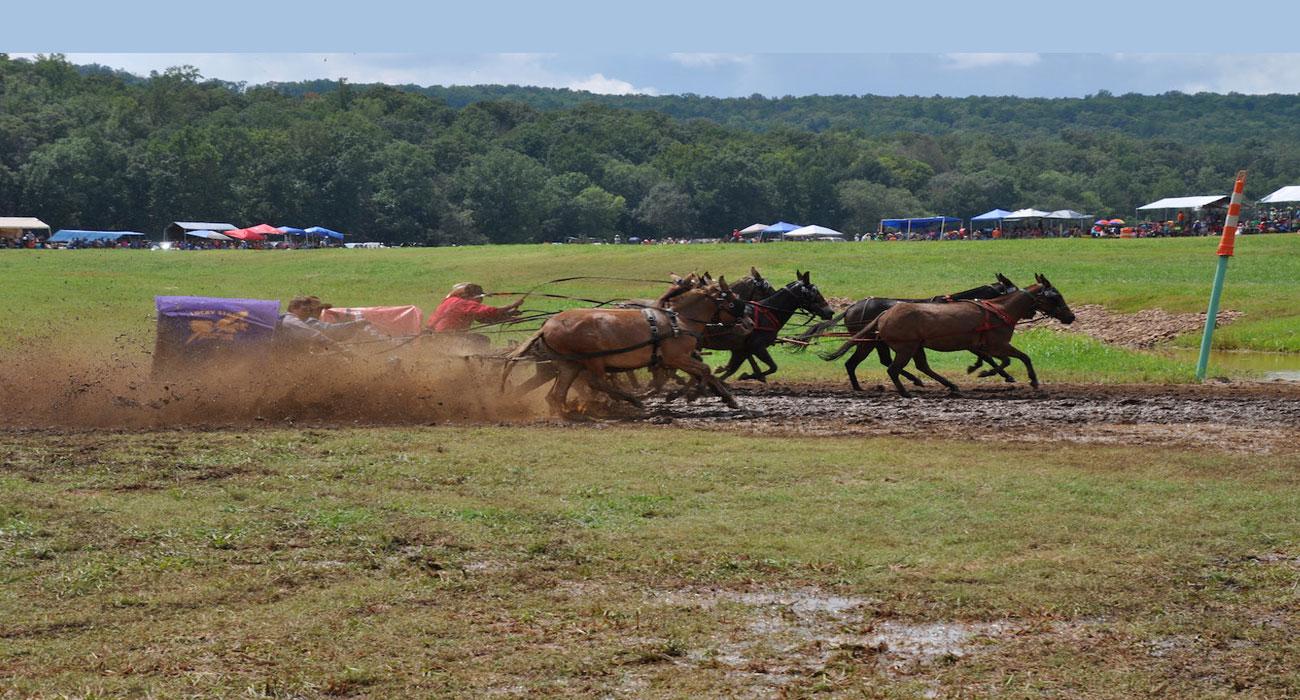 Take a Wild Ride This Weekend - August 23-25 | Only In Arkansas