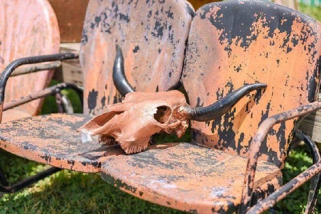 Junk Ranch Fall 2015 Vintage glider and cow skull