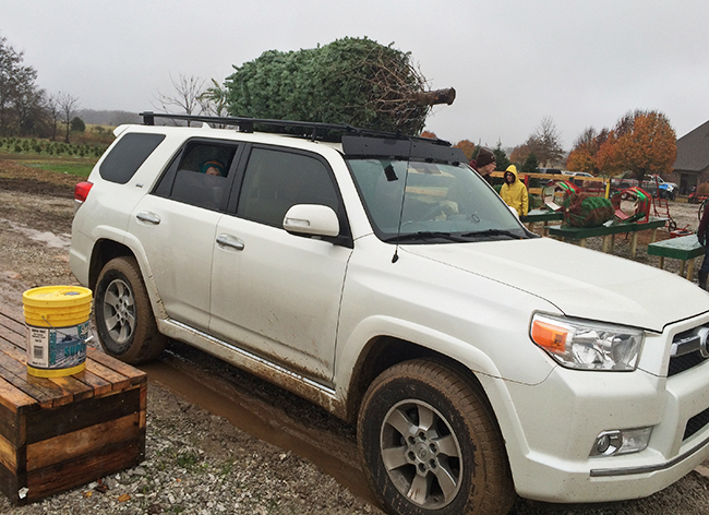 Tying the tree on top of the car