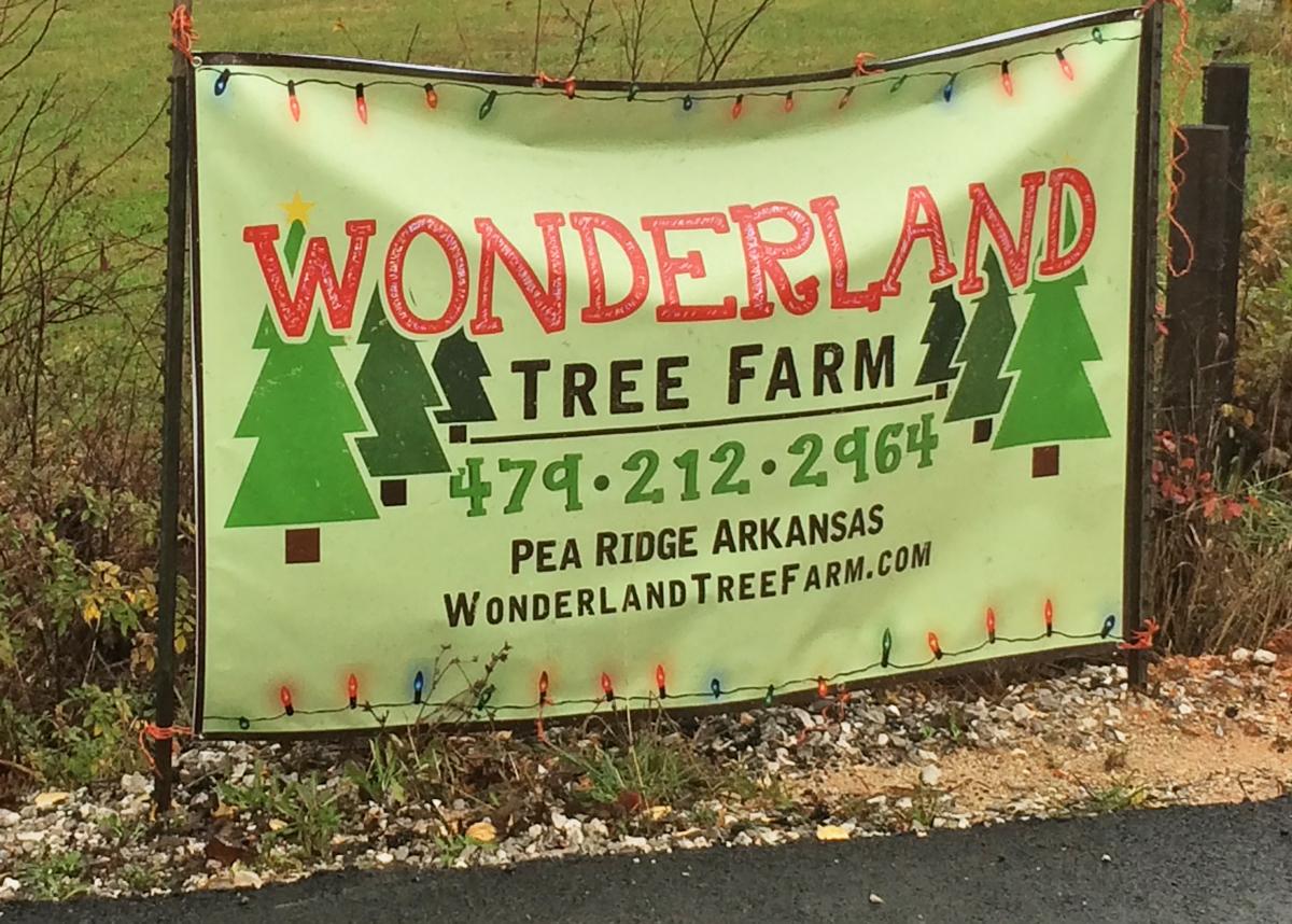 Wonderland Tree Farm Cover Photo