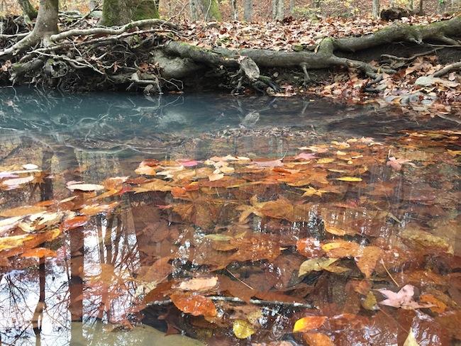 Ozark Highlands Trail Leaf Filled Pond