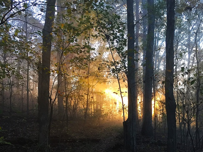 Sunrise through the woods in the Ozark Highlands Trail