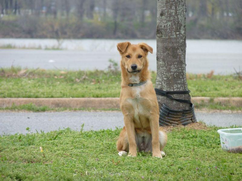 Dog in Little Rock