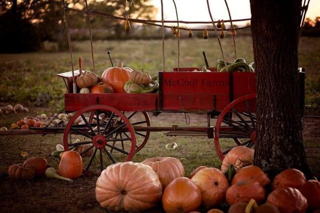 pumpkin-festival-2016