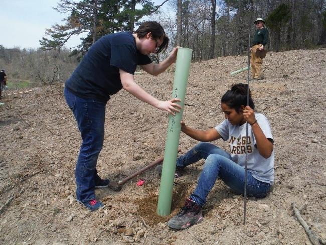 ozark-chinquapin-tree-planting-nwacc-students