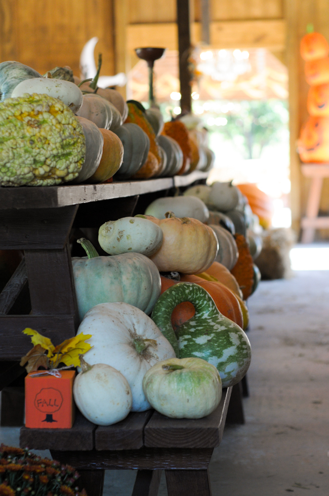 pumpkin-apple-agritourism-1