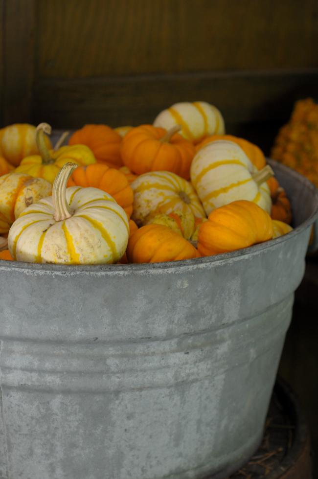 pumpkin-apple-agritourism-5