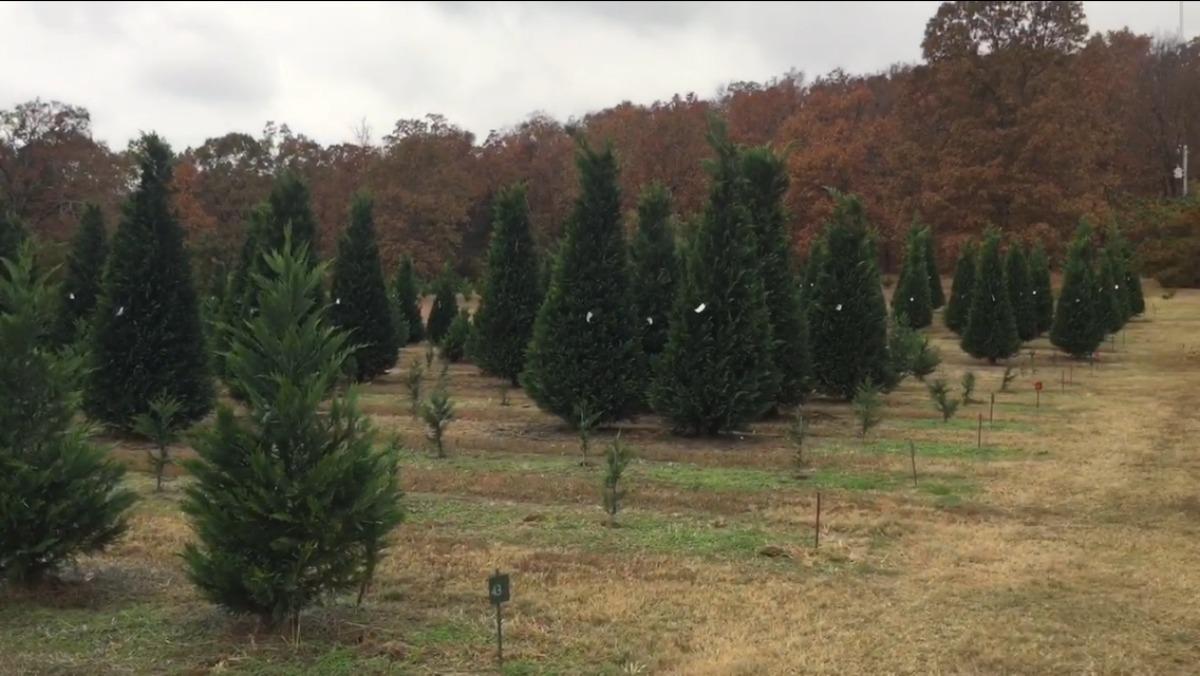Arkansas Tree Farm Header