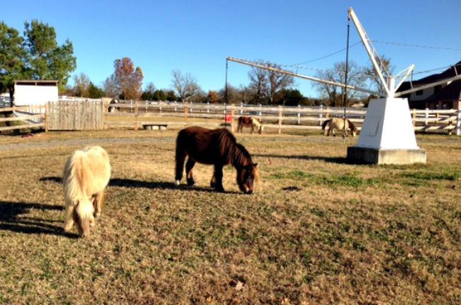 eqb-mini-horses