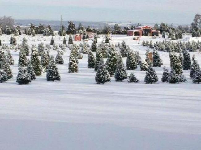 pine-grove