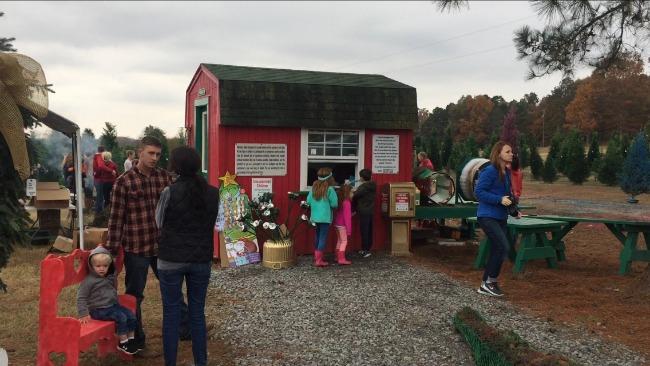Arkansas Christmas Tree Farms Only In Arkansas