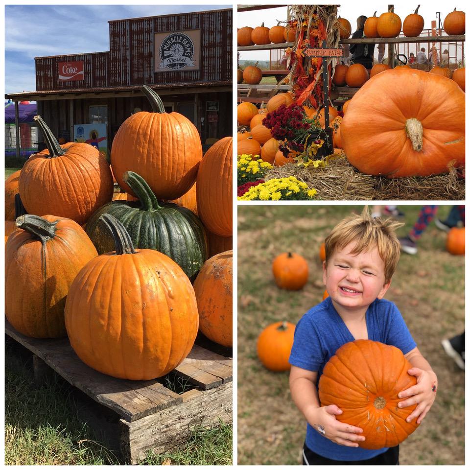 Arkansas Pumpkin Patches