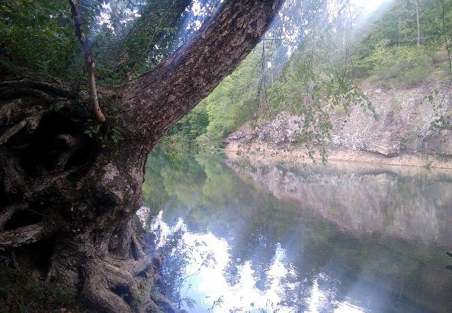 Bluffton Preserve
