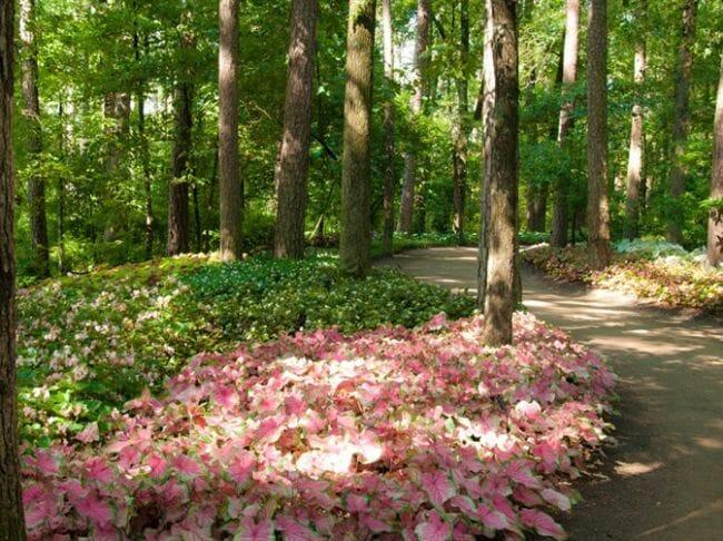 Garvan Woodland Gardens - Shady Getaways in Arkansas