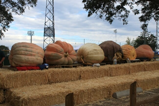 Arkansas State Fair: Giant Pumpkins & Watermelons