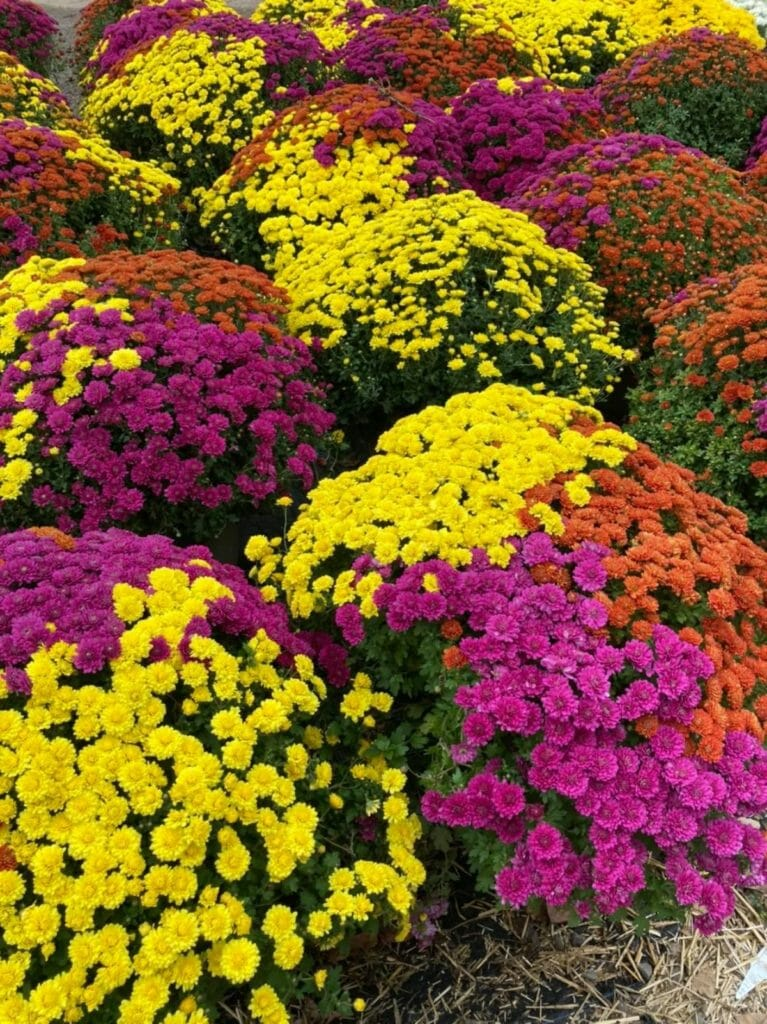 Parks Brothers Farm and Parks Wholesale Plants